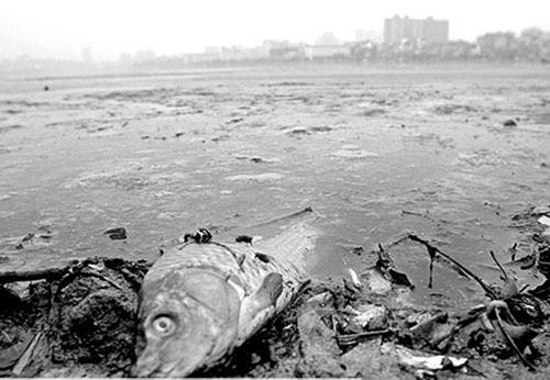 五大环境污染事件回顾 《诺亚传说》呼吁低碳环保